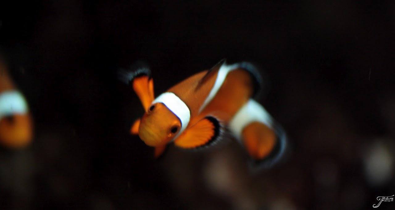 1.02 - Nemo