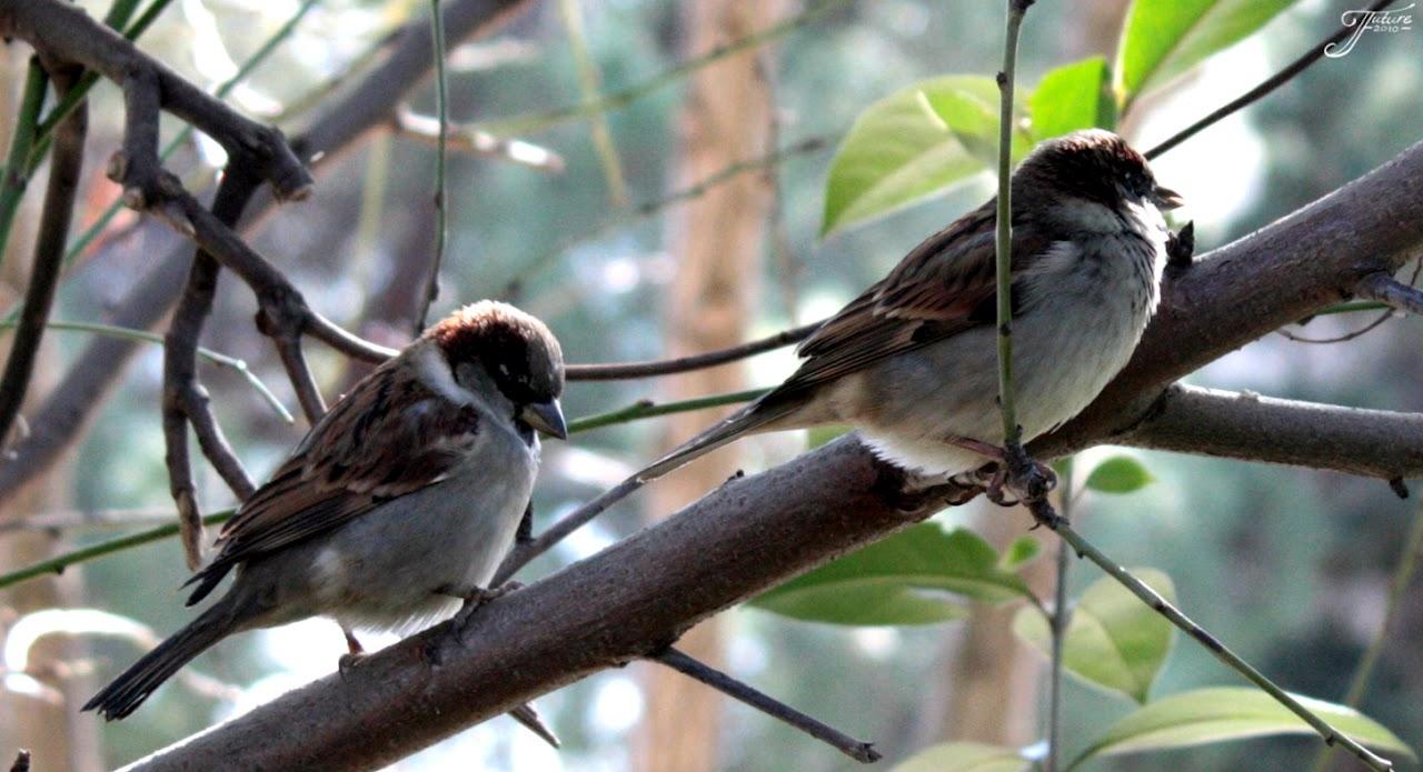 1.09 - Sparrows